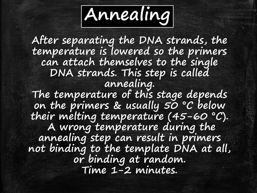 After separating the DNA strands, the temperatu...