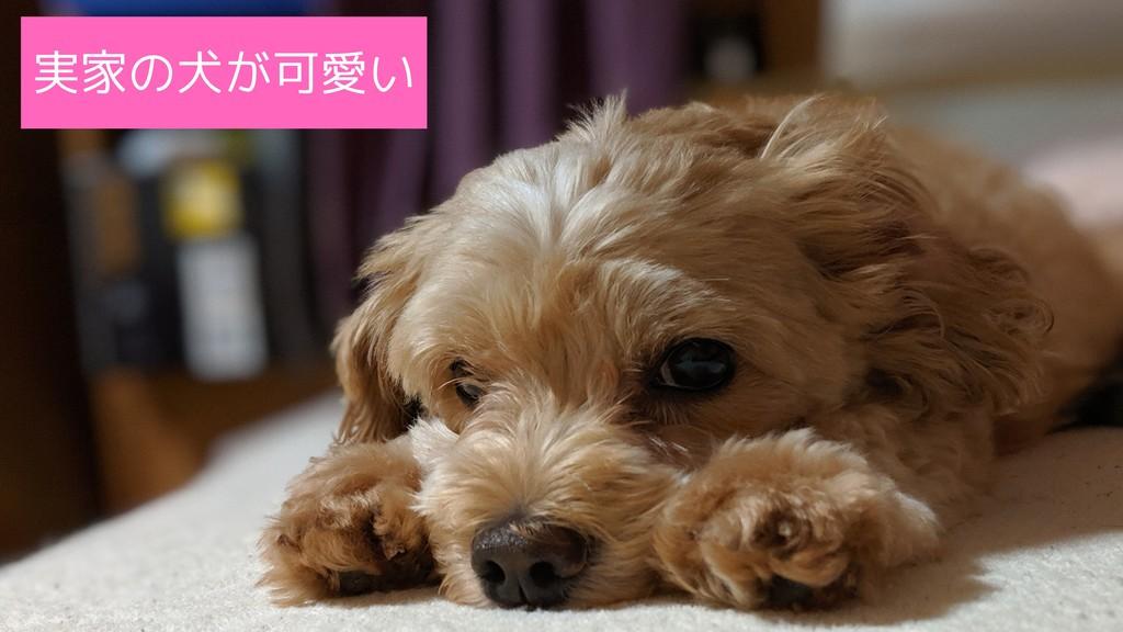 実家の犬が可愛い