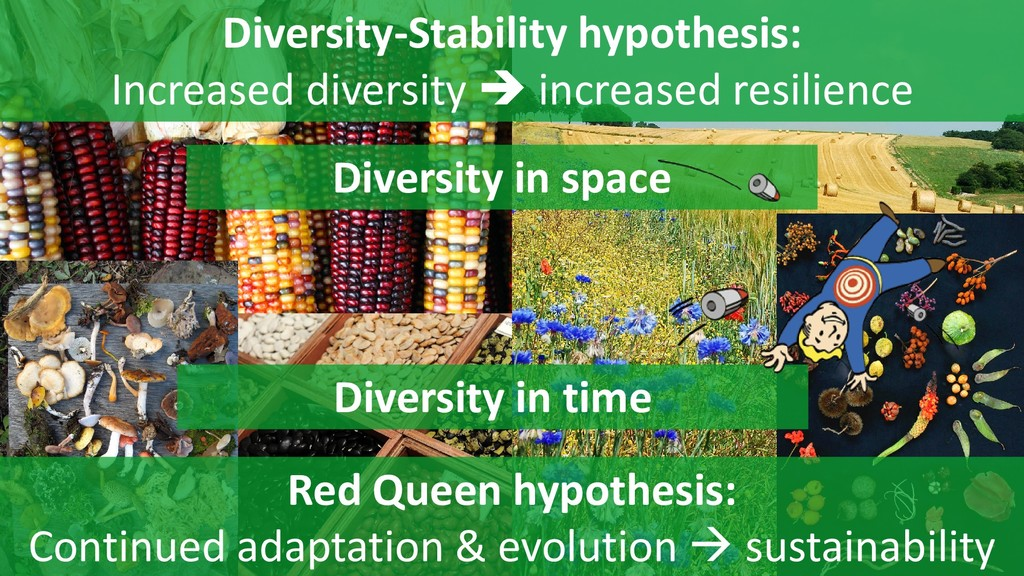 4 Diversity-Stability hypothesis: Increased div...