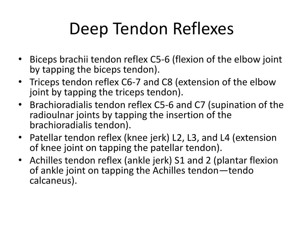 Deep Tendon Reflexes • Biceps brachii tendon re...