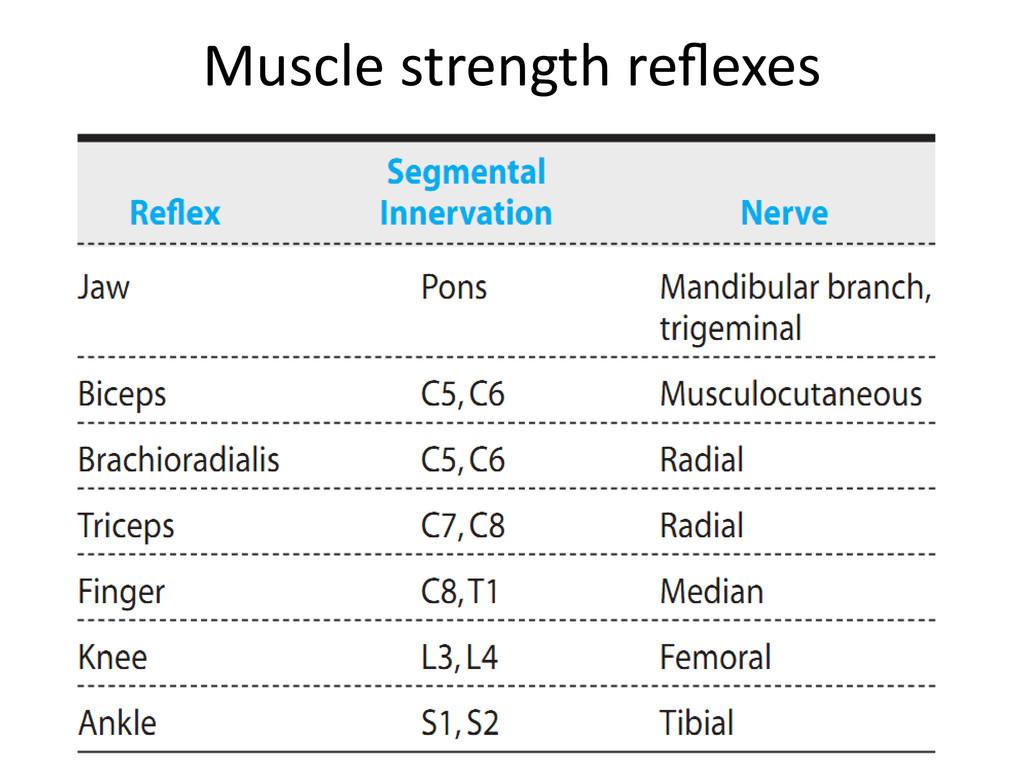 Muscle strength reflexes