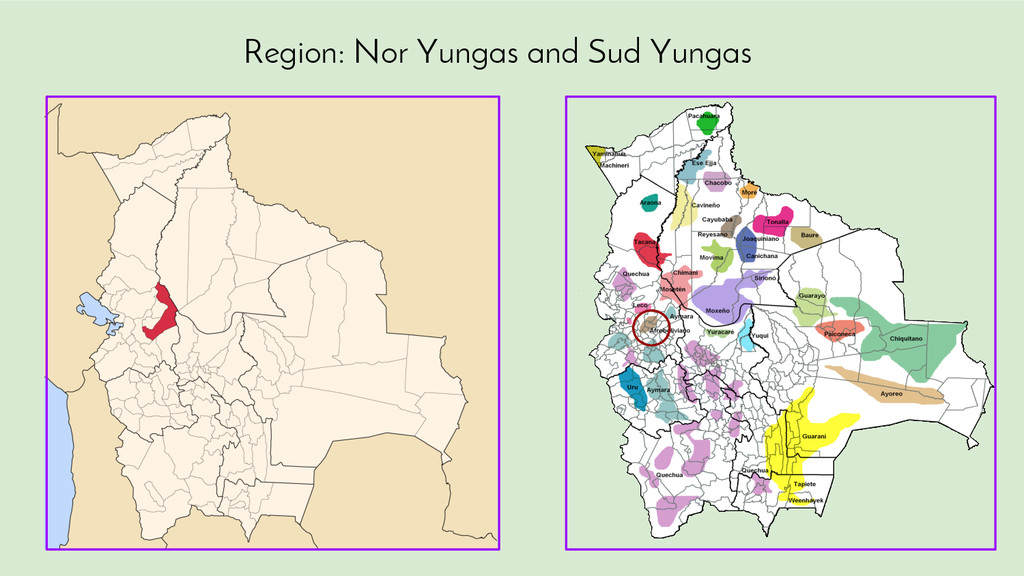Region: Nor Yungas and Sud Yungas