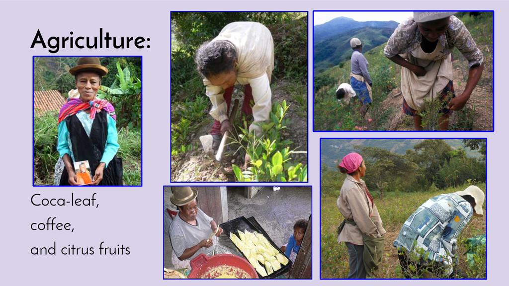 Agriculture: Coca-leaf, coffee, and citrus frui...