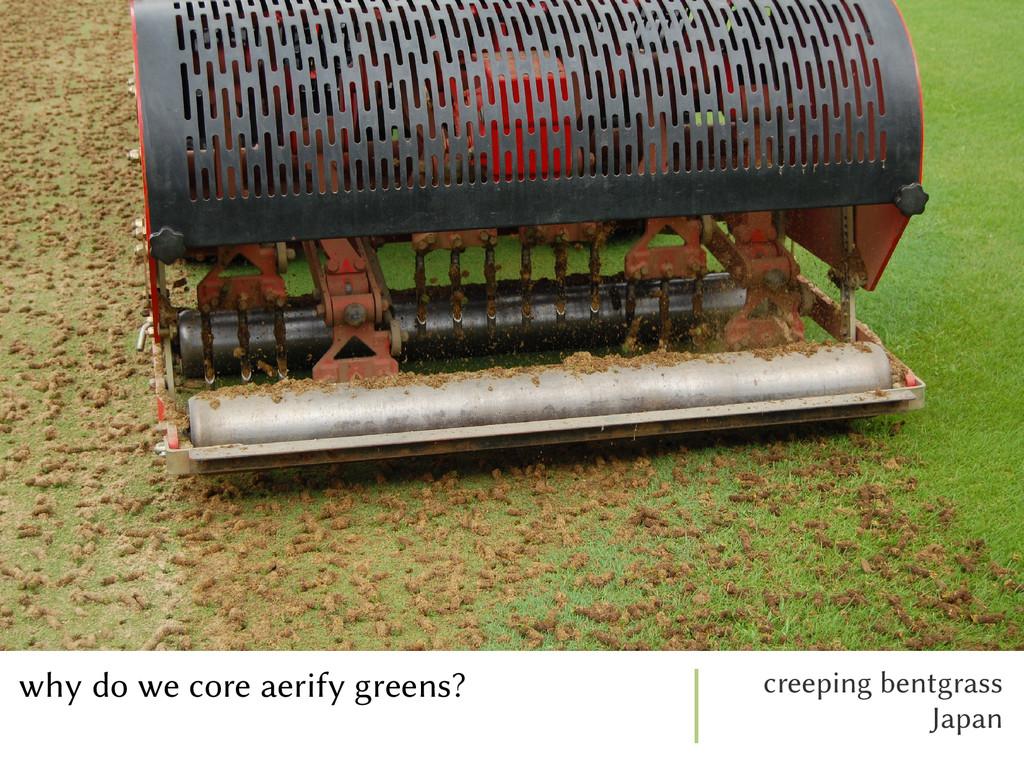 why do we core aerify greens? creeping bentgras...