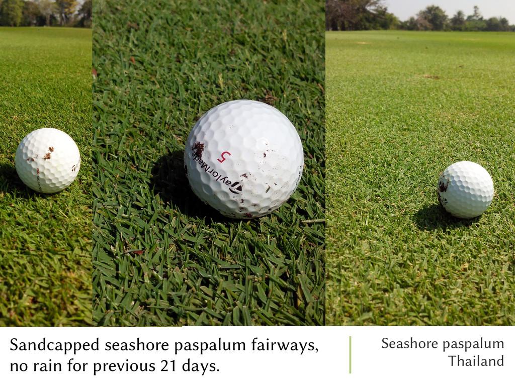 Sandcapped seashore paspalum fairways, no rain ...