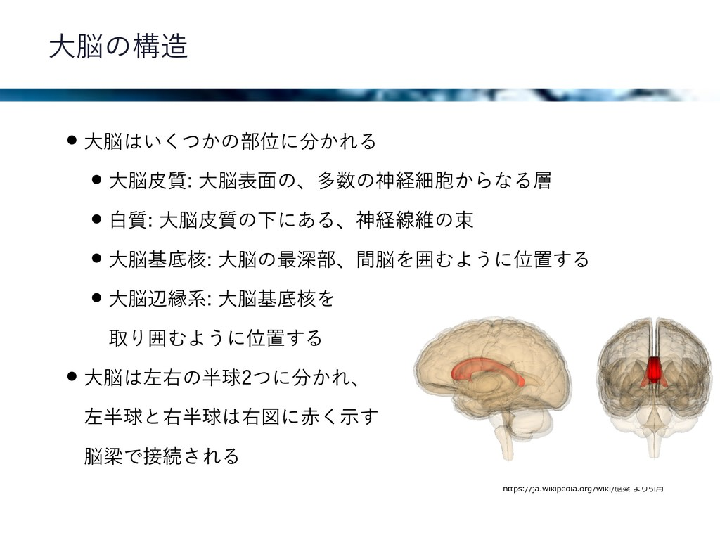 左右の⼤脳半球は脳梁で接続される https://ja.wikipedia.org/wiki/...