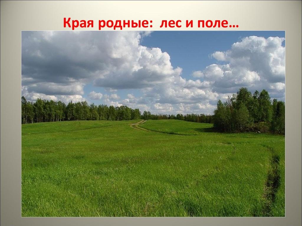 Края родные: лес и поле…