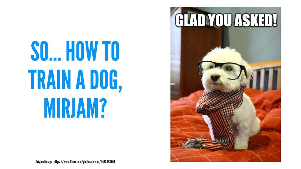 SO... HOW TO TRAIN A DOG, MIRJAM? Original imag...