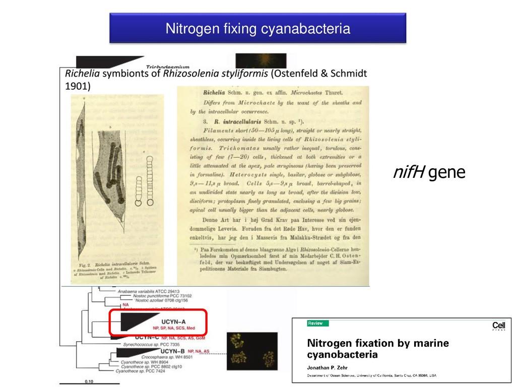 Nitrogen fixing cyanabacteria nifH gene