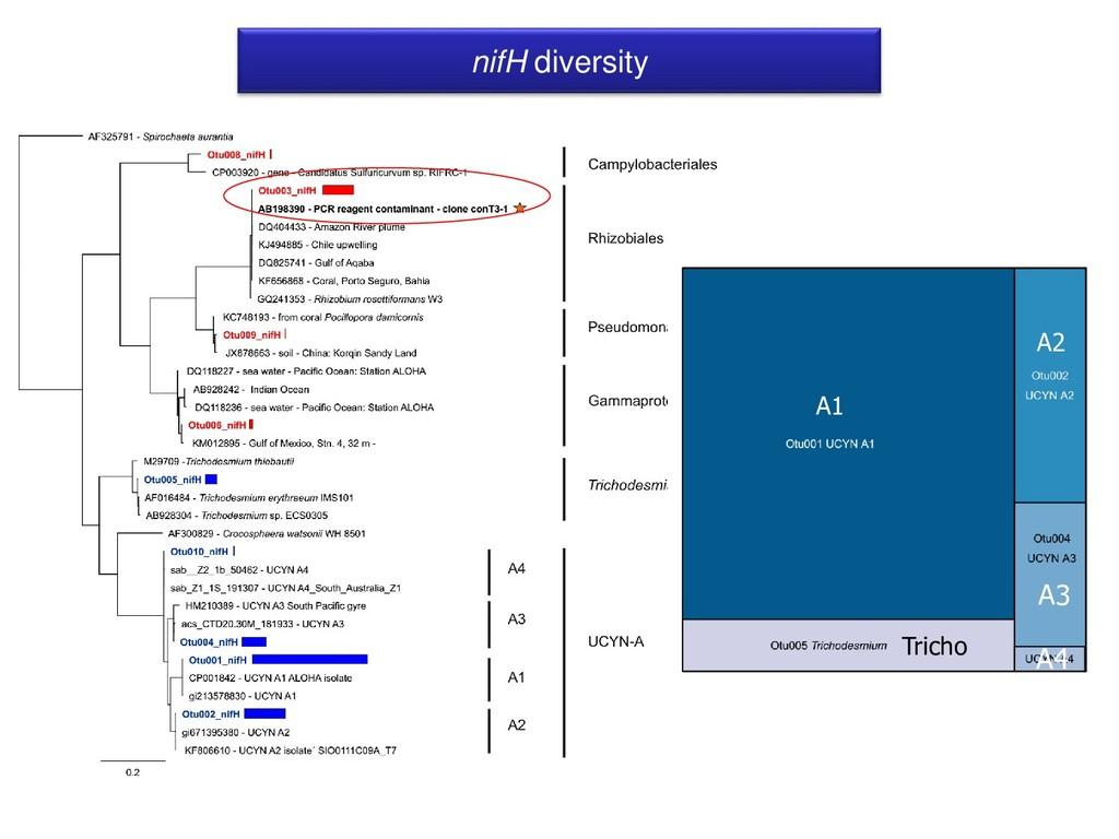nifH diversity A1 A3 Tricho A2 A4