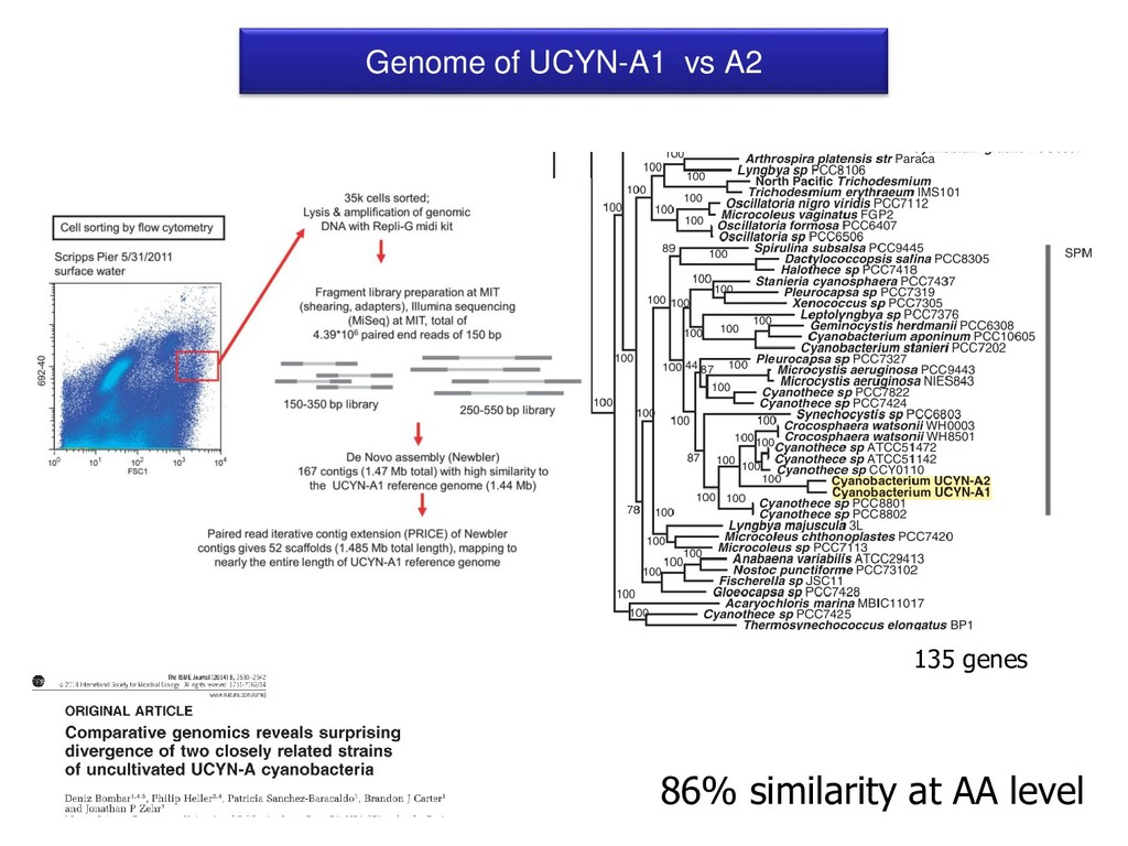Genome of UCYN-A1 vs A2 86% similarity at AA le...