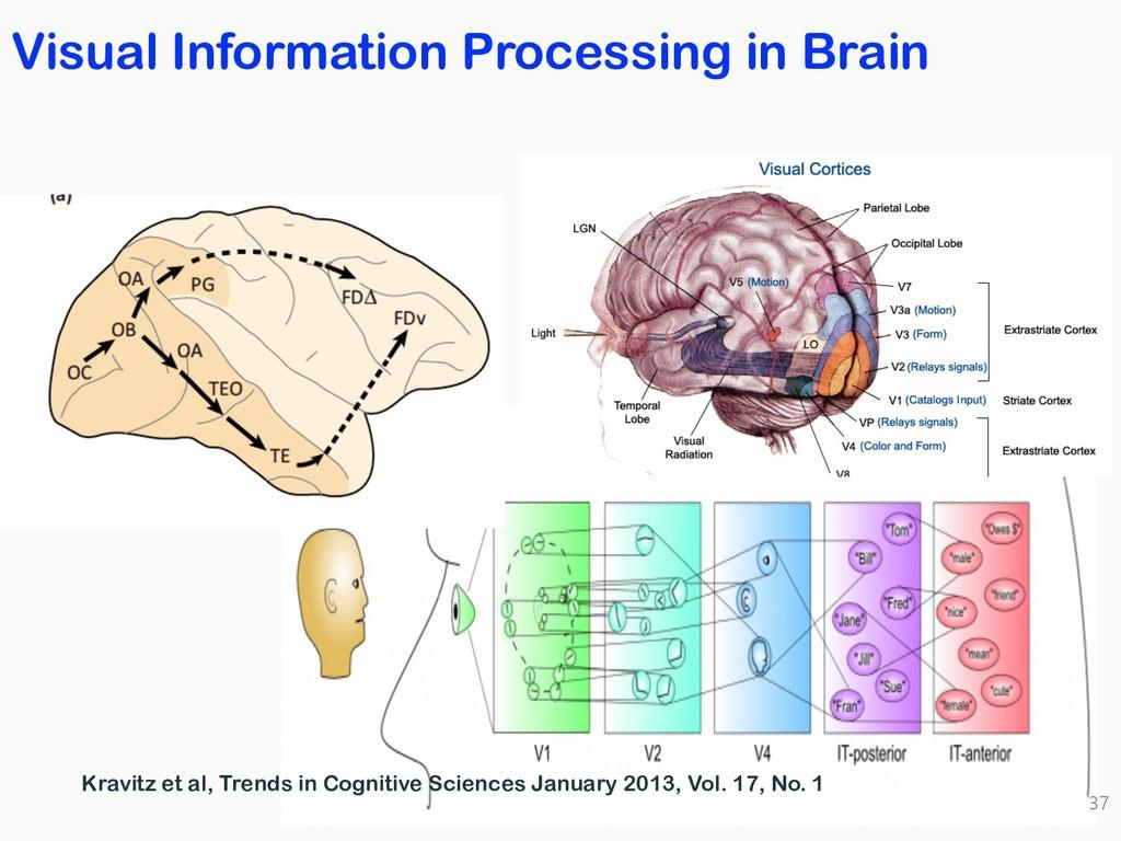 Visual Information Processing in Brain 37 Kravi...