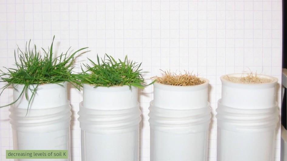 decreasing levels of soil K