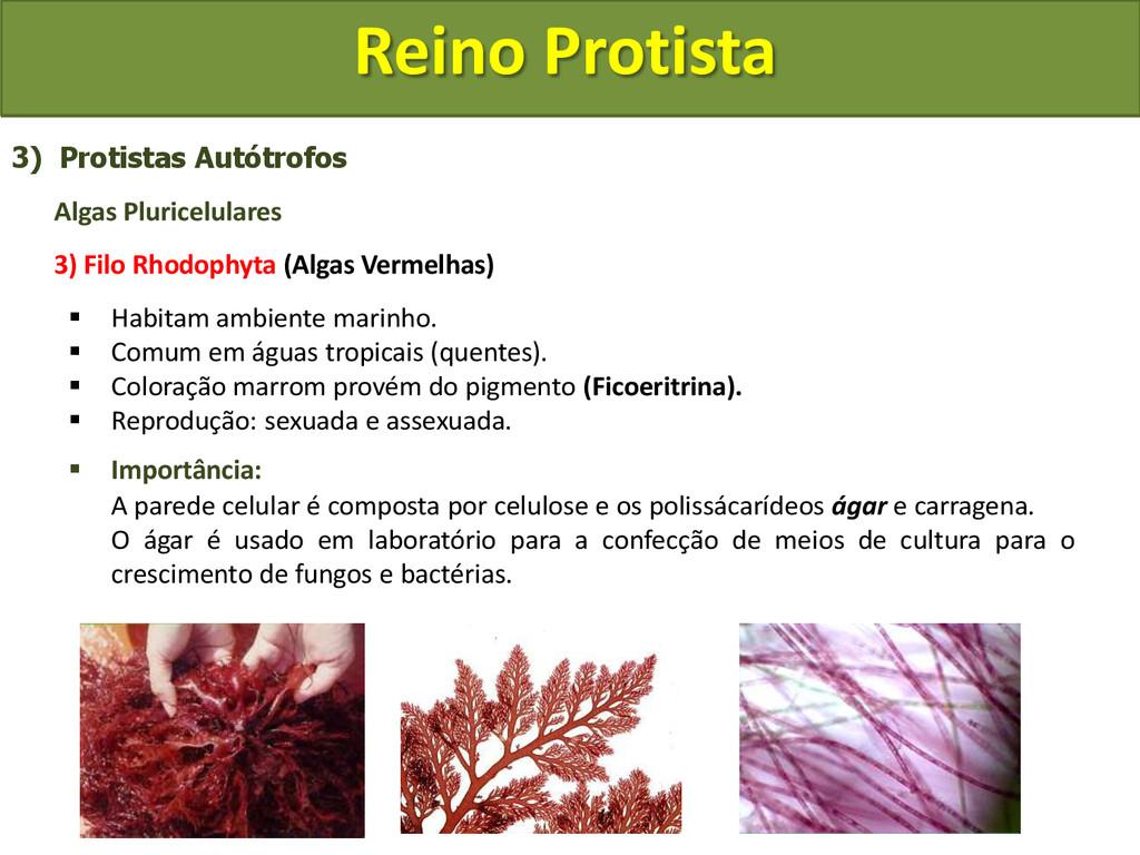 Reino Protista 3) Protistas Autótrofos Algas Pl...