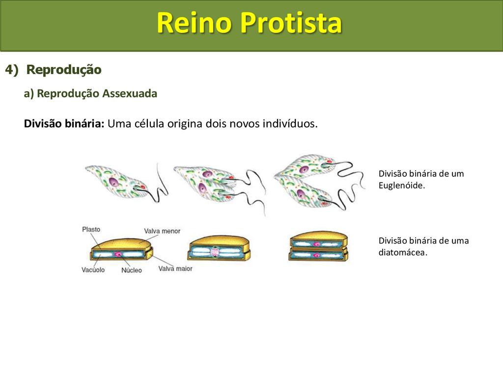 Reino Protista 4) Reprodução a) Reprodução Asse...
