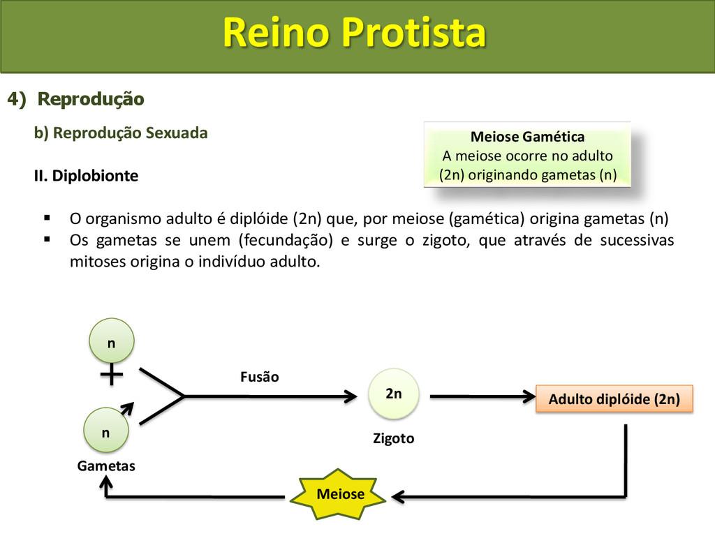 Reino Protista 4) Reprodução b) Reprodução Sexu...