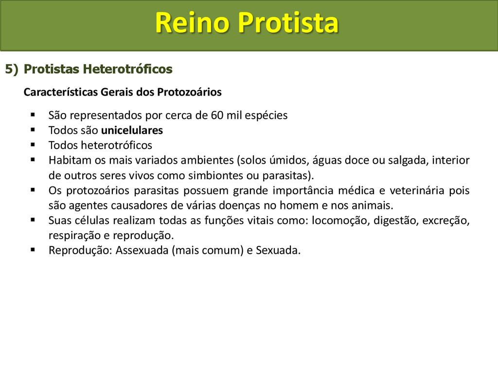 Reino Protista 5) Protistas Heterotróficos Cara...