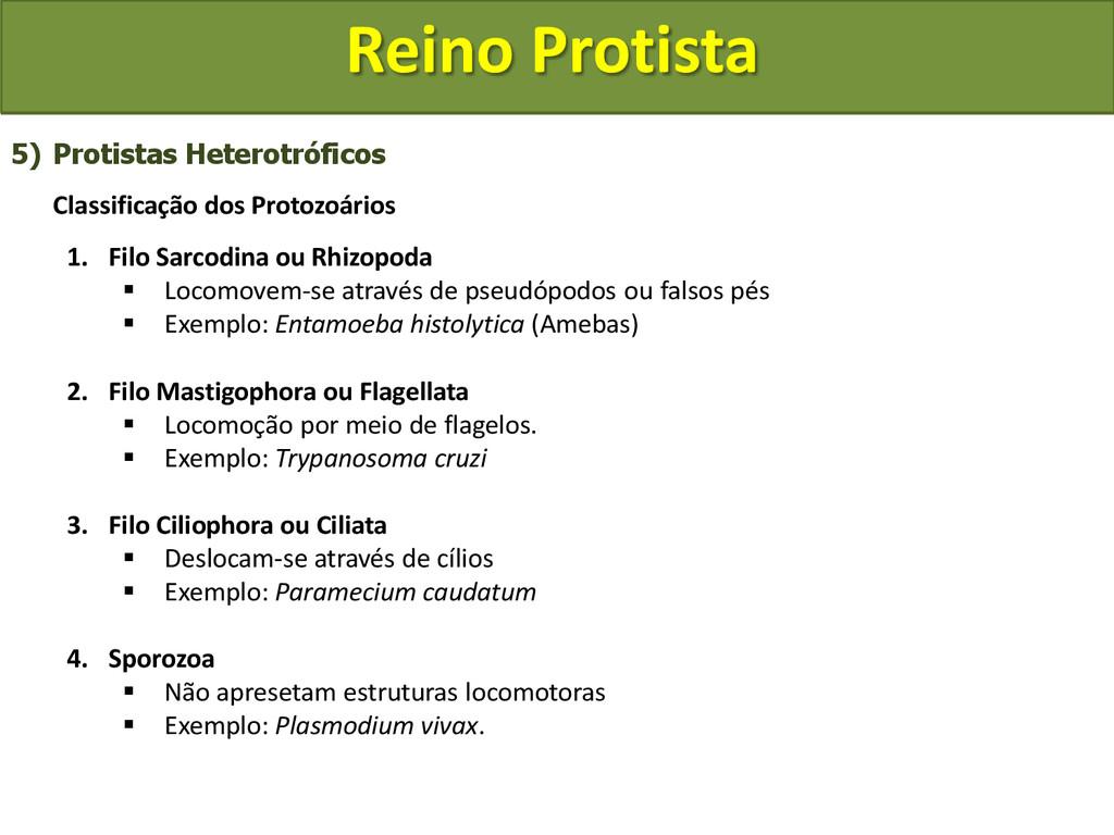 Reino Protista 5) Protistas Heterotróficos Clas...
