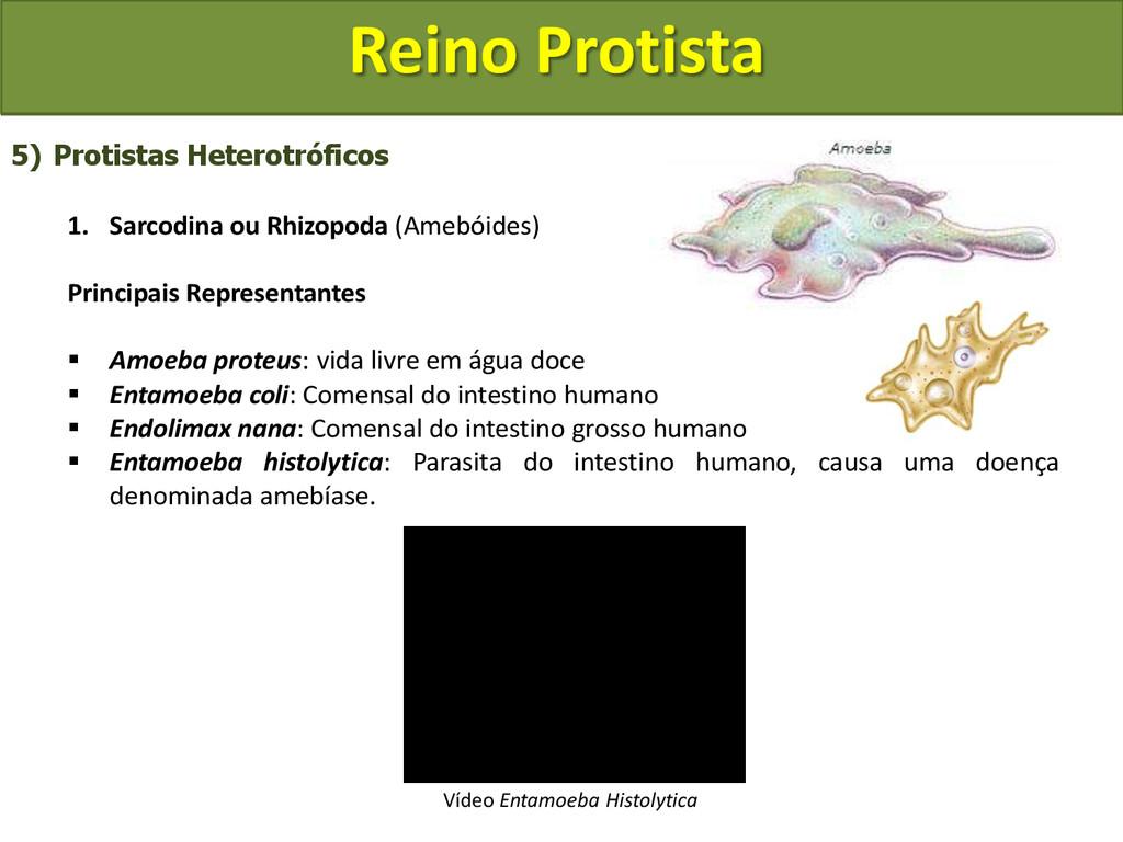 Reino Protista 5) Protistas Heterotróficos 1. S...