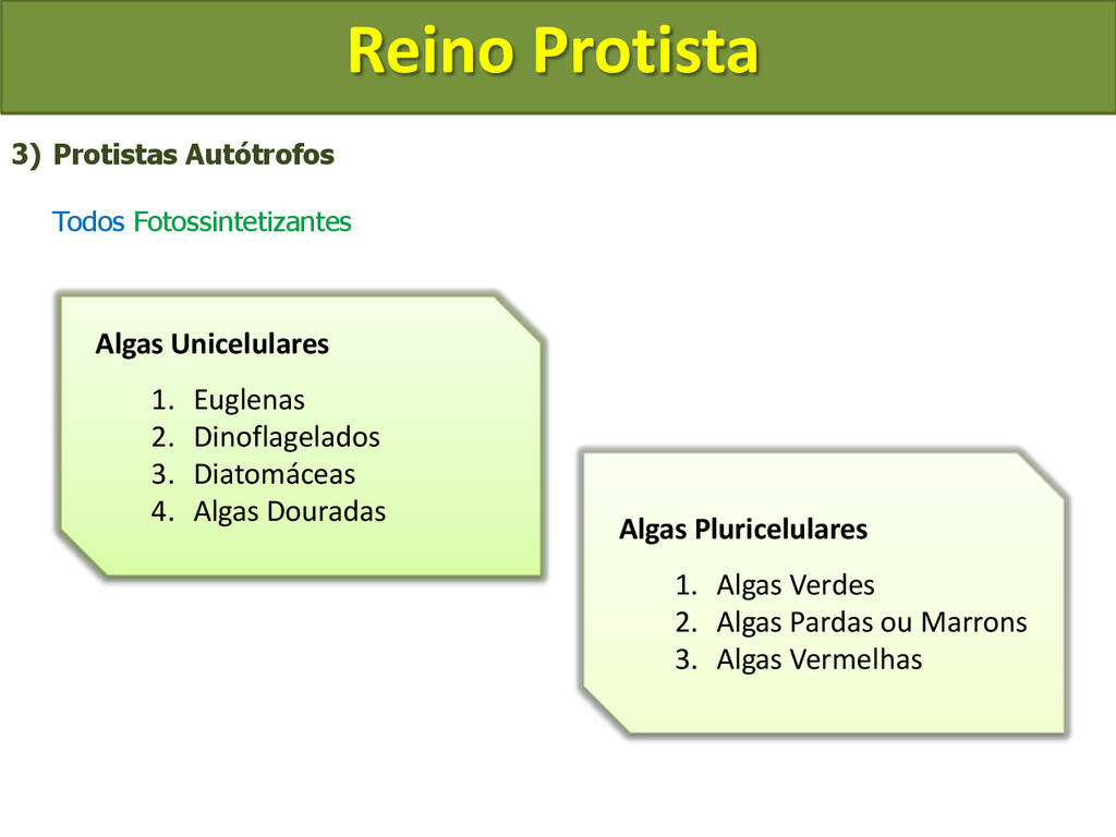 Reino Protista 3) Protistas Autótrofos Todos Fo...