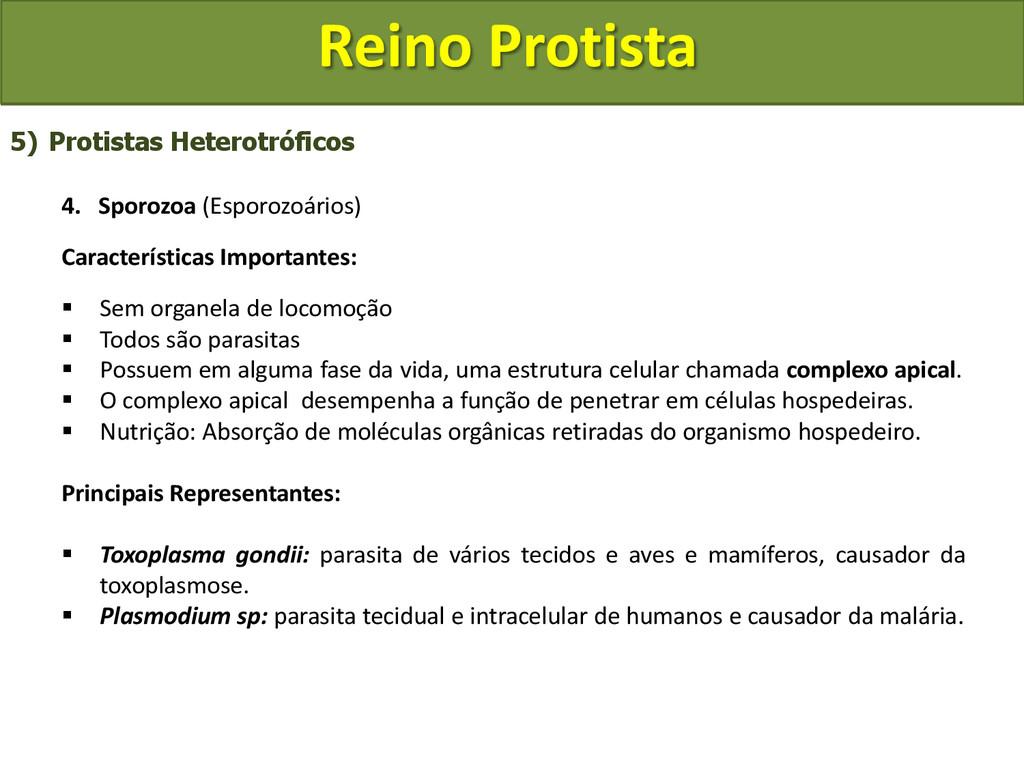 Reino Protista 5) Protistas Heterotróficos 4. S...