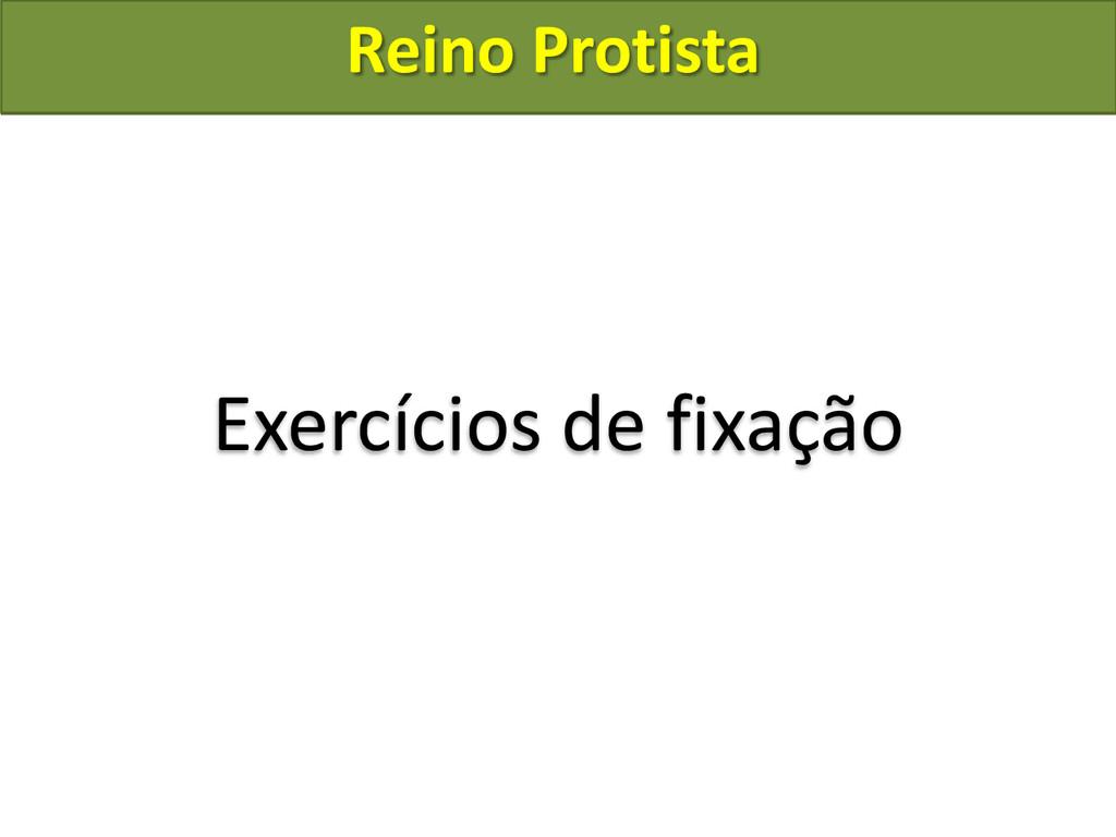 Reino Protista Exercícios de fixação