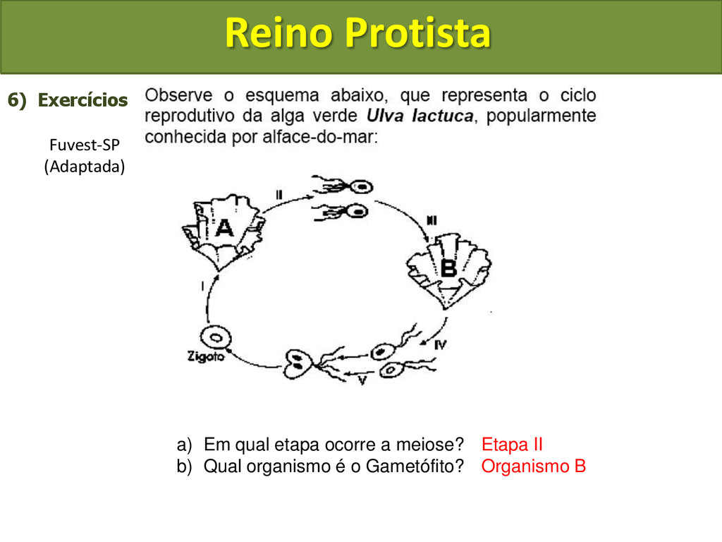 Reino Protista 6) Exercícios Fuvest-SP (Adaptad...
