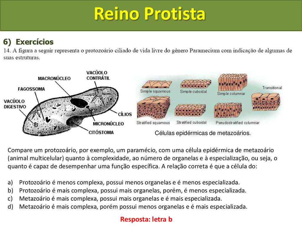 Reino Protista 6) Exercícios Compare um protozo...