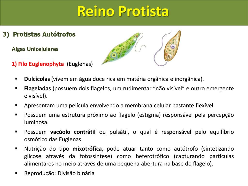 Reino Protista 3) Protistas Autótrofos Algas Un...