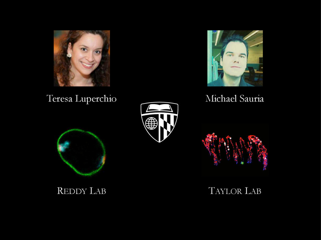 TAYLOR LAB REDDY LAB Teresa Luperchio Michael S...