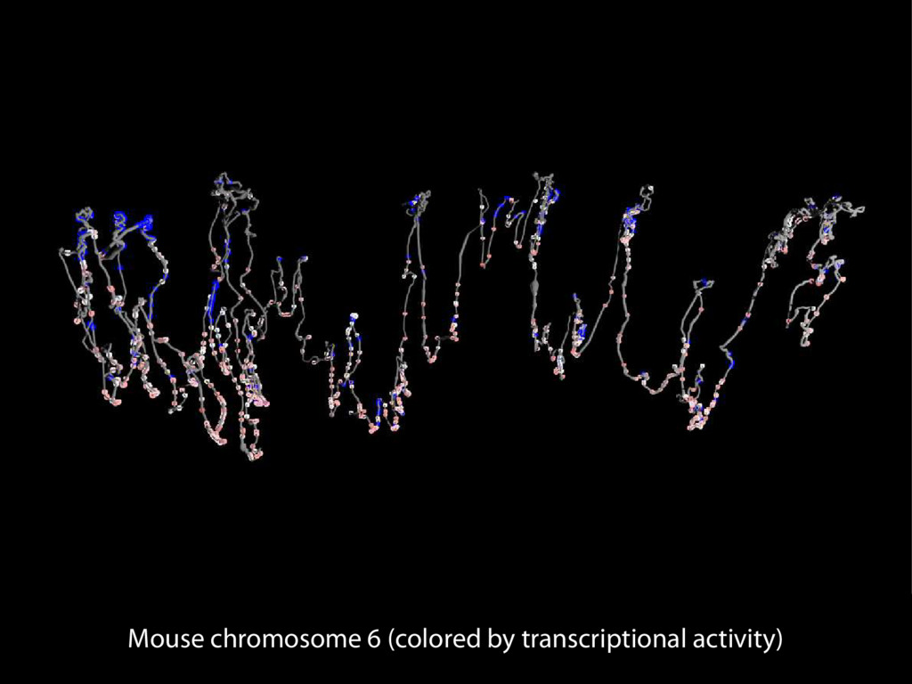 Mouse chromosome 6 (colored by transcriptional ...