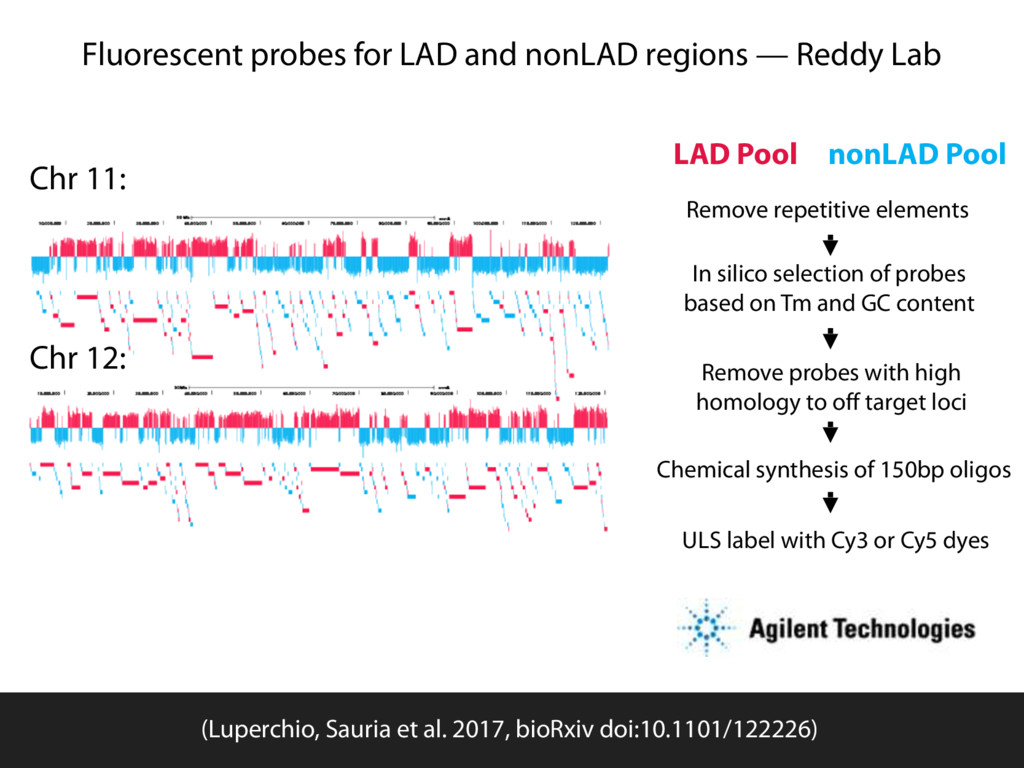 Fluorescent probes for LAD and nonLAD regions —...