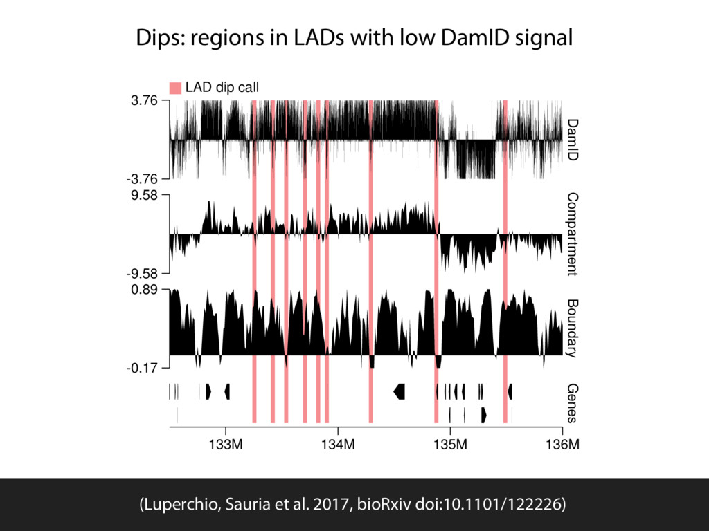 Dips: regions in LADs with low DamID signal -3....
