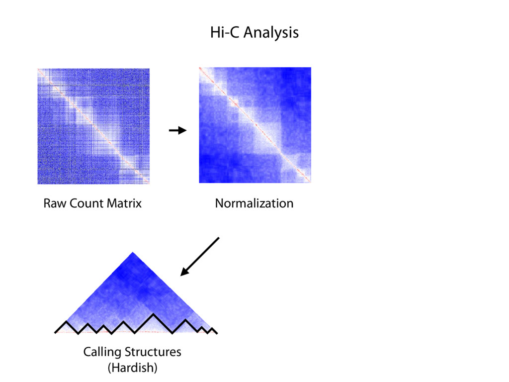 Hi-C Analysis Raw Count Matrix Normalization N ...