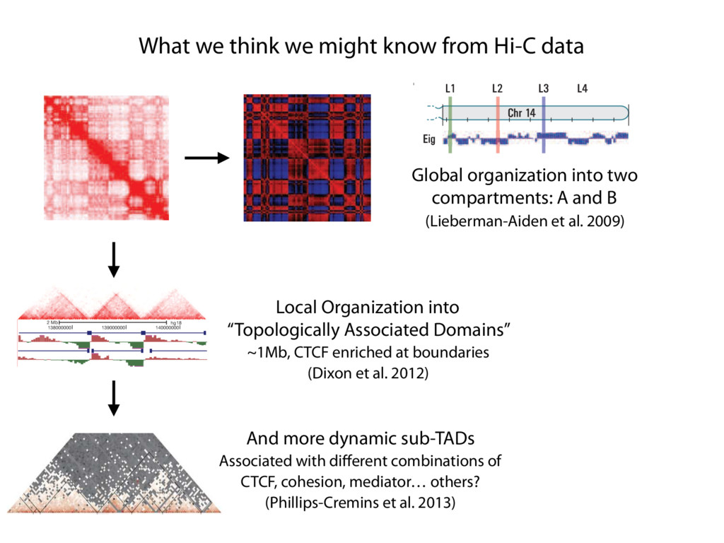 What we think we might know from Hi-C data E F ...