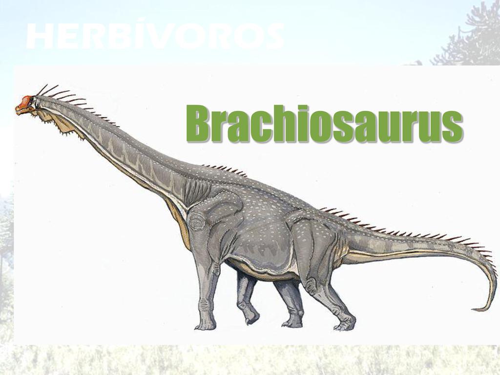 HERBÍVOROS Brachiosaurus