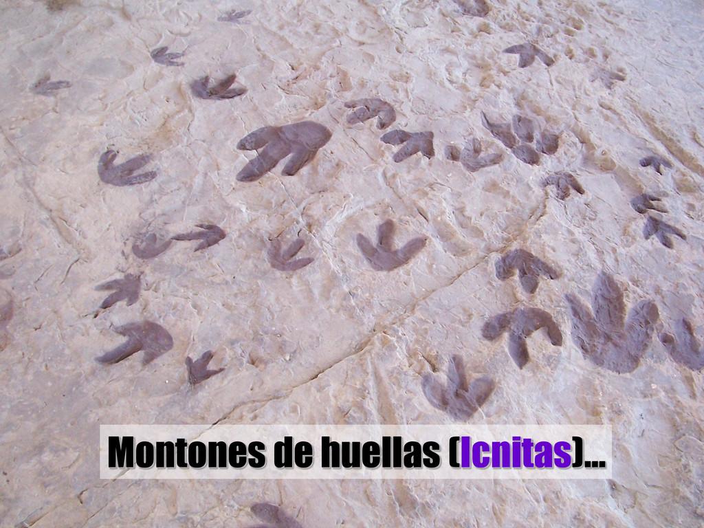 Montones de huellas (Icnitas)…