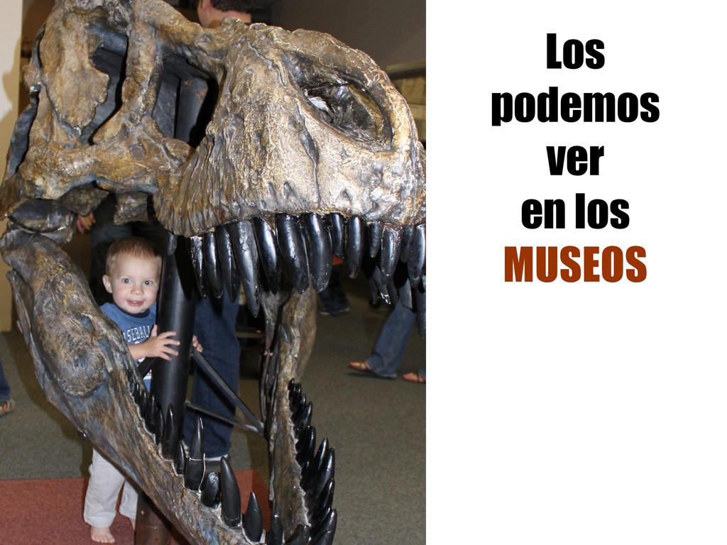 Los podemos ver en los MUSEOS