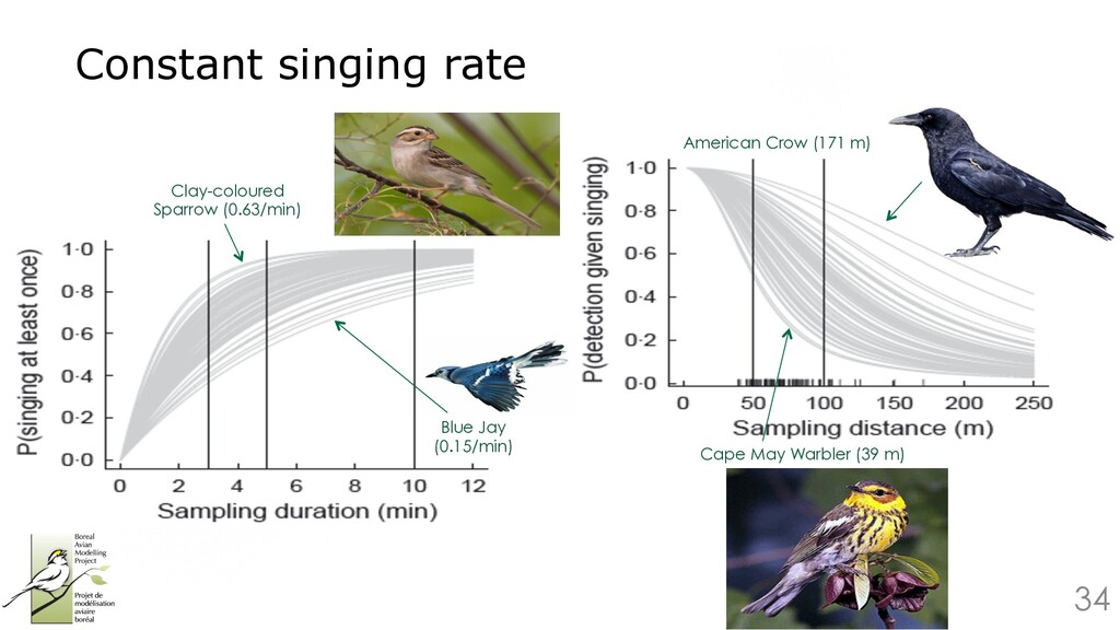 34 Constant singing rate Clay-coloured Sparrow ...