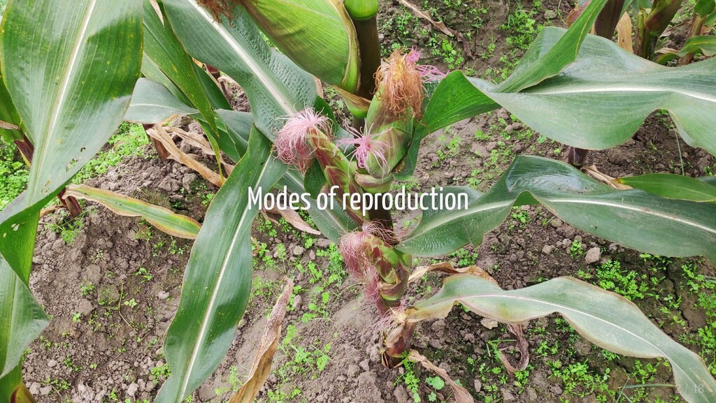 Modes of reproduction Modes of reproduction 2 /...