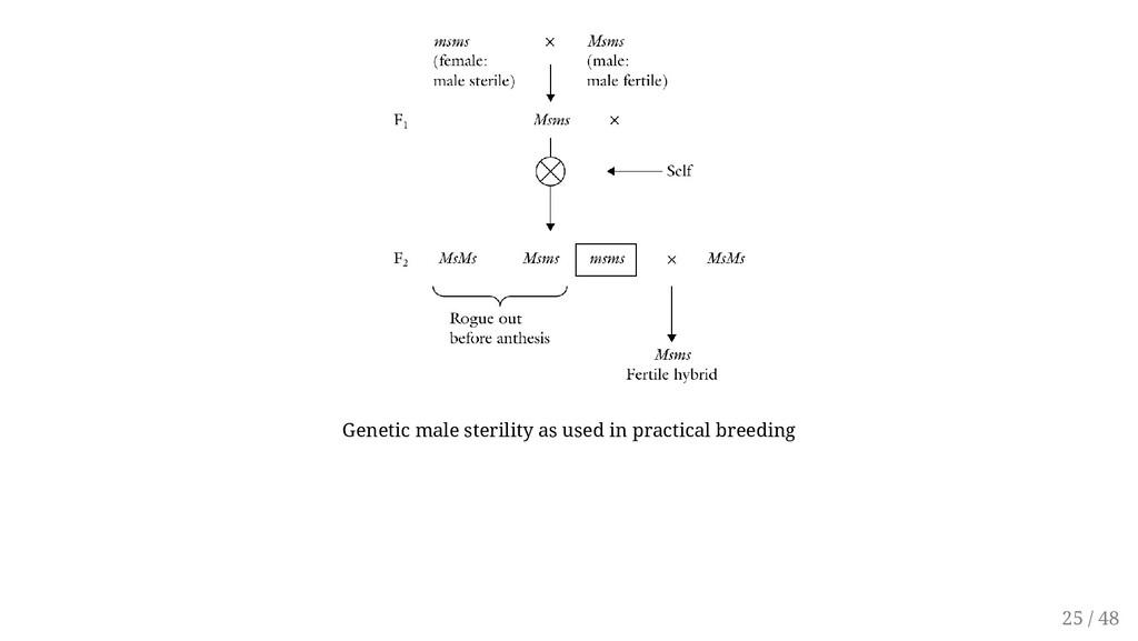 Genetic male sterility as used in practical bre...