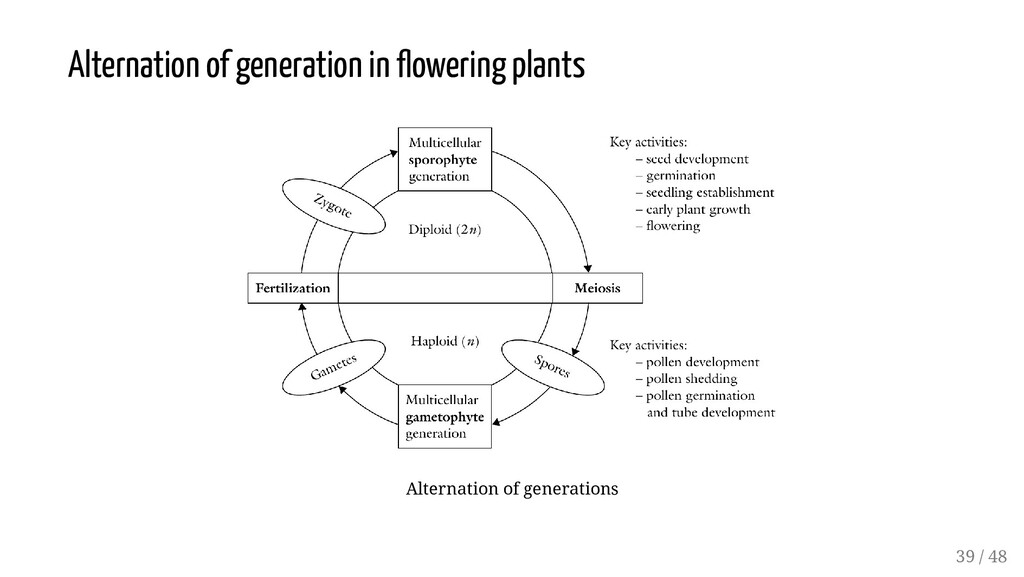 Alternation of generation in owering plants Alt...