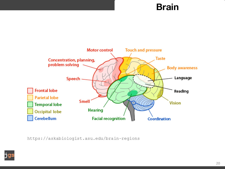 20 Brain Timestamp AF3 F7 F3 FC5 T7 P7 O1 O2 P8...