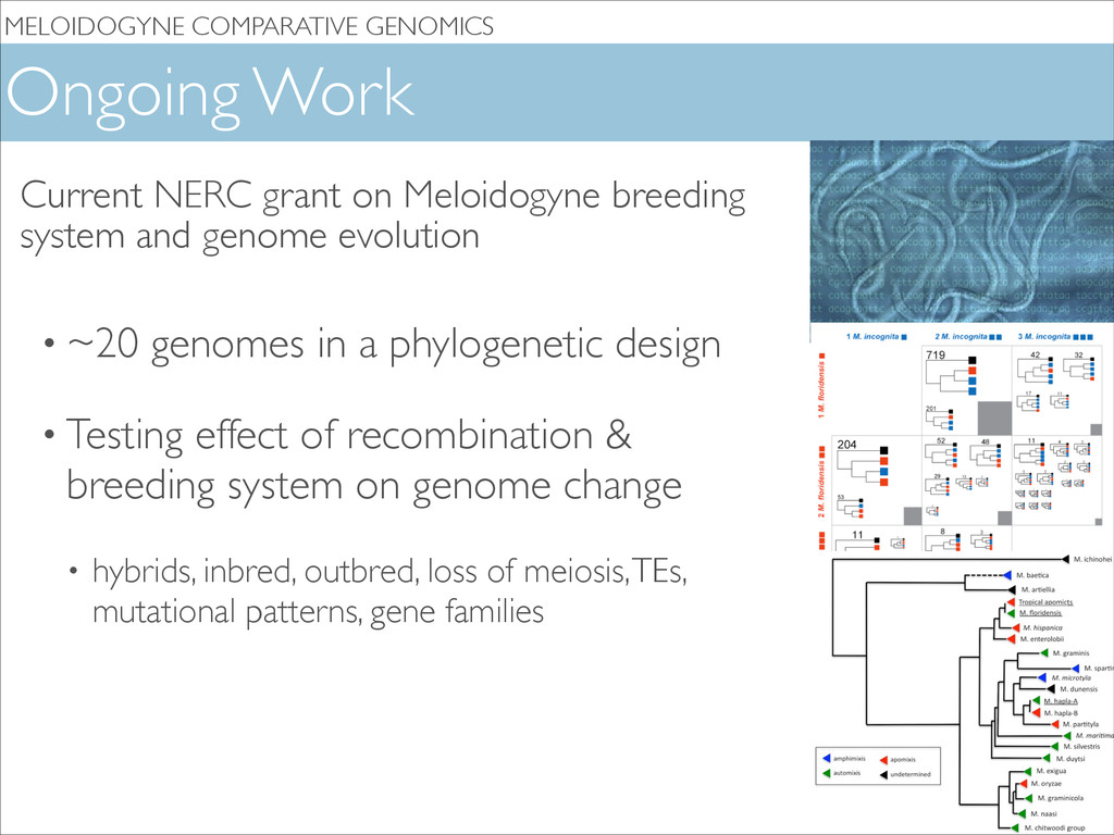MELOIDOGYNE COMPARATIVE GENOMICS Ongoing Work •...