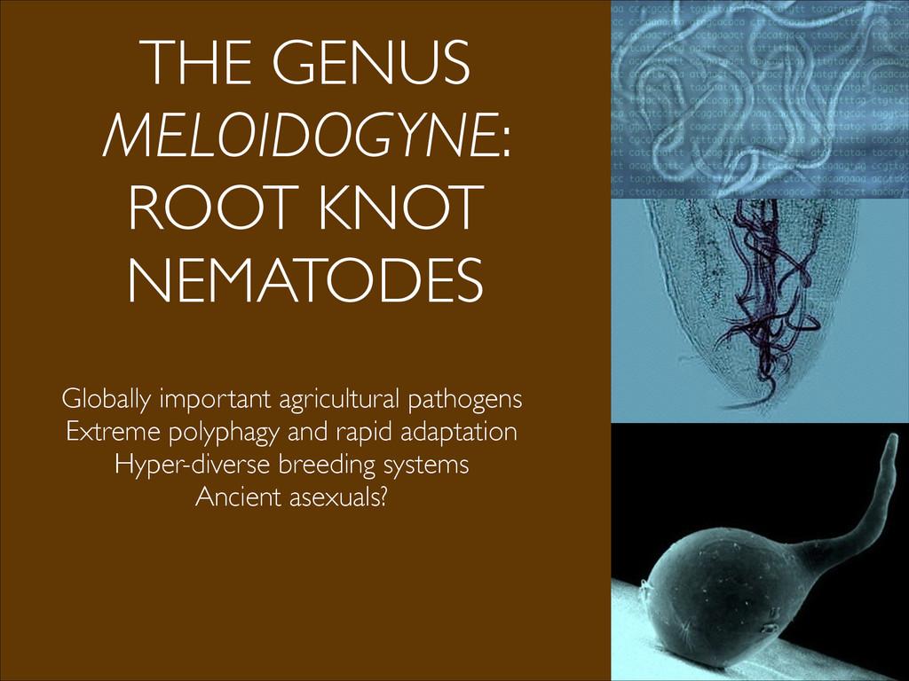 THE GENUS MELOIDOGYNE: ROOT KNOT NEMATODES Glob...