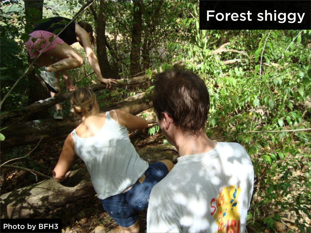 Forest shiggy Photo by BFH3