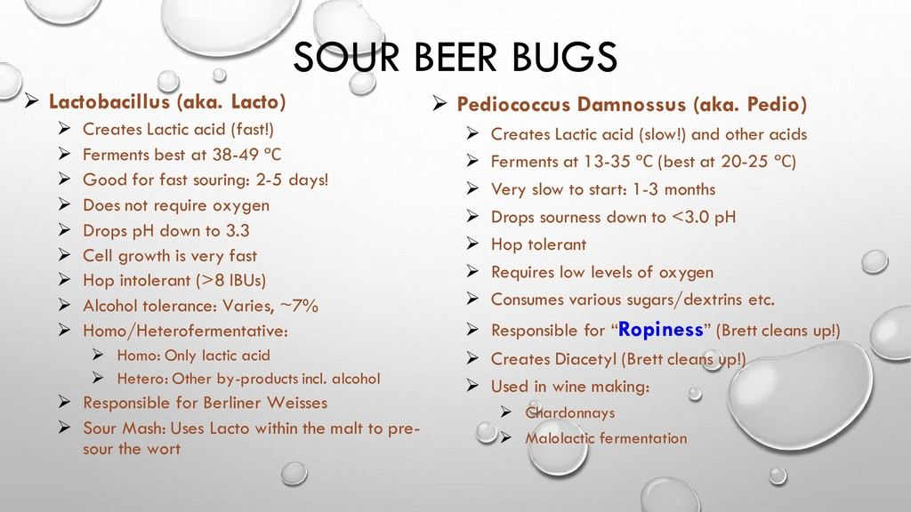 SOUR BEER BUGS Lactobacillus (aka. ➢ Lacto) Cre...