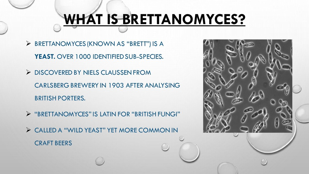 WHAT IS BRETTANOMYCES? ➢ BRETTANOMYCES (KNOWN A...