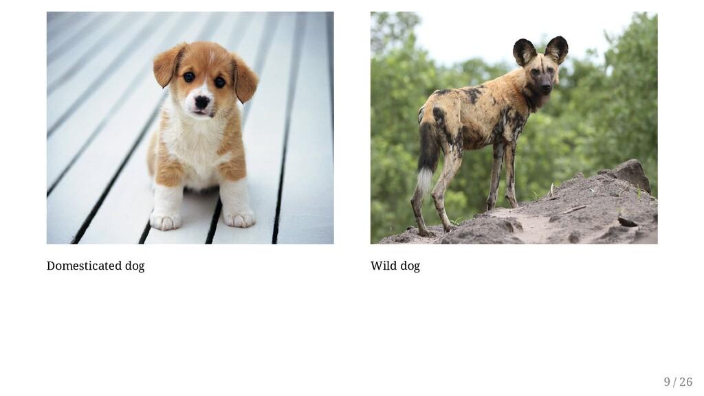 Domesticated dog Wild dog 9 / 26