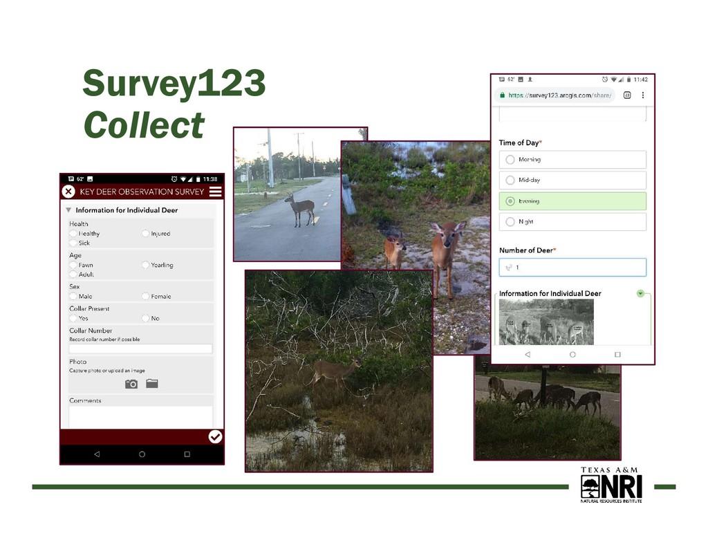 Survey123 Collect